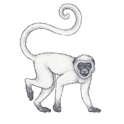 Monkey Horoscope