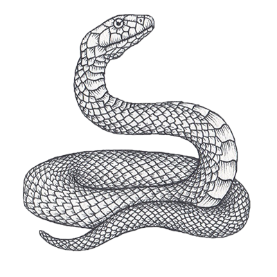 Snake Horoscope